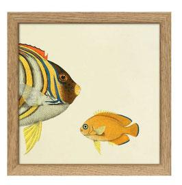 Halbe Fische buntgestreift (rechts)