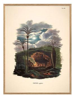 Palmen-Print Palmarum Noir II