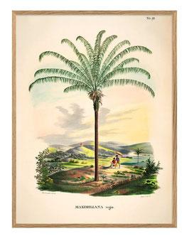 Palmen-Print Maximiliana Regia