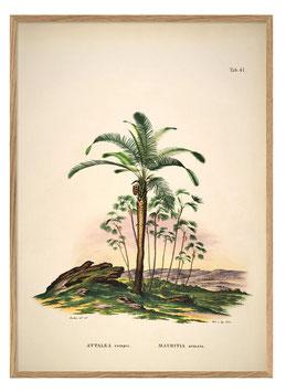 Palmen-Print Attalea
