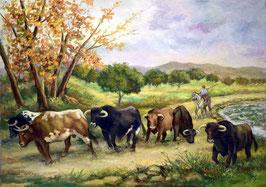 Toros en el campo