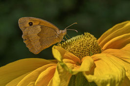Doppelkarte A5 naturweiss - Schmetterling - P8114891-G