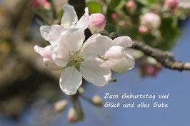 Doppelkarte B6 zartrosa - Apfelblüten - P4123206-G