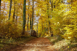 Doppelkarte A5 naturweiss /  Herbstwald 1 / 008-TF