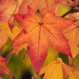 Doppelkarte quadratisch blütenweiss / Herbstblatt - MSW7420
