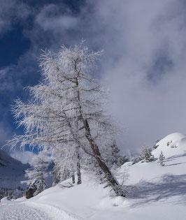 Doppelkarte B6 blütenweiss  - Winter 4