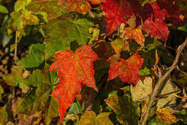 Doppelkarte A5 naturweiss - Herbstlaub - PA311791
