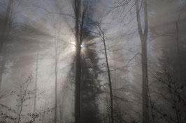 Doppelkarte A5 blütenweiss - Wald - Nebel - Sonne III - PA149049