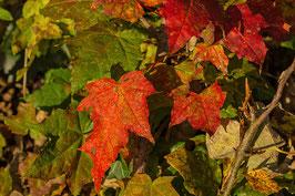 Doppelkarte A5 baileys - Herbstlaub - PA311791
