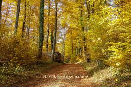 Doppelkarte A5braun /  Herbstwald 1 / 008-TF