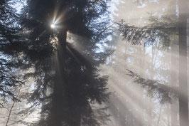 Doppelkarte A5 blütenweiss - Wald - Nebel - Sonne IV - PA149059