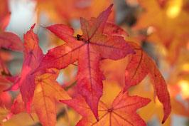 Doppelkarte A5 naturweiss - Herbstlaub - MSW7412