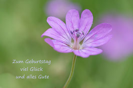 Doppelkarte B6 blütenweiss - Blume - P6028578-G