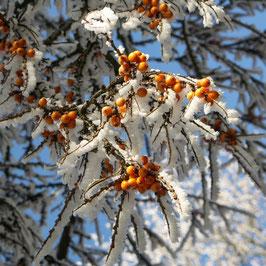 Doppelkarte quadratisch blütenweiss - Beeren  - PICT0024-3Q