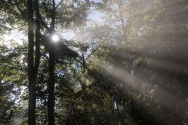 Doppelkarte A5 naturweiss - Wald - Nebel - Sonne II - PA167918