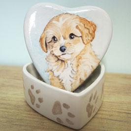 Koesterdoosje hartvormig maat M, met Cavoodle Hond