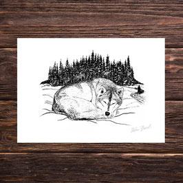 Huskytraum | Signierter Druck