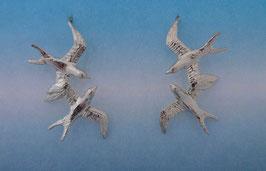Double Swallow Earrings  SW 2 FW
