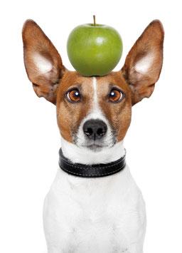 Recallkarten Motiv Hund 2