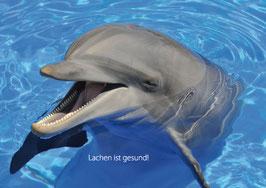 Recallkarten Motiv Delfin 1