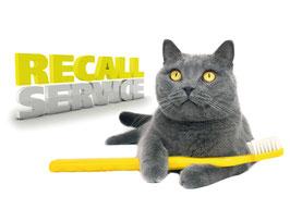 Recallkarten Motiv Katze 2