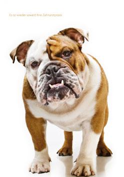 Recallkarten Motiv Hund 1