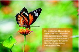 Sujet 7:  Schmetterling