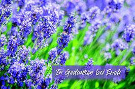 Sujet 6:  Lavendel
