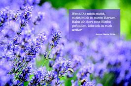 Sujet 4:  Lavendel