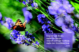 Sujet 5:  Lavendel