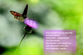 Sujet 8:  Schmetterling