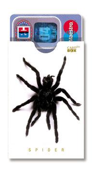 cardbox 009 > Spinne