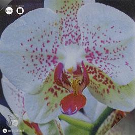 Serviettes Orchidée