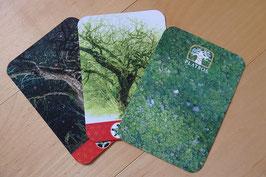 アフリカンツリーオラクルカード