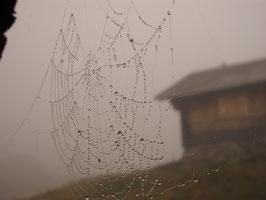 Spinnwebe (Foto)
