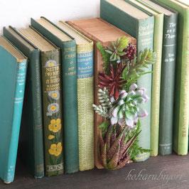 商品名 ボタニカルブック・お父さんの書斎A ブラウン(多肉植物)