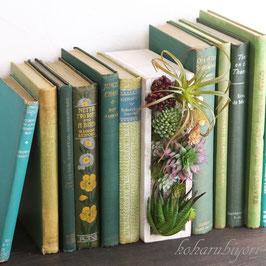 商品名  ボタニカルブック・お父さんの書斎A ホワイト(多肉植物)