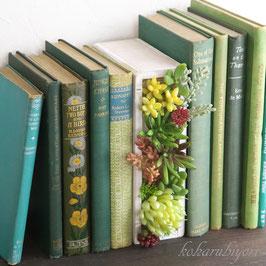 商品名 ボタニカルブック・お父さんの書斎B ホワイト(多肉植物)