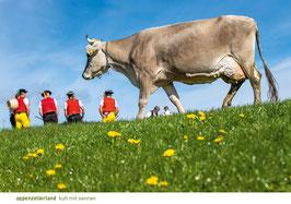 appenzellerland kuh mit sennen