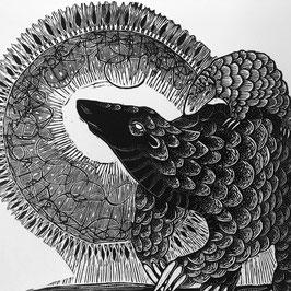 Species Series: Pangolin