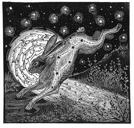 Midnight Rabbit