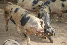 Wurst vom Bunten Bentheimer Landschwein