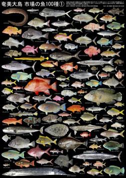 奄美大島 市場の魚100種①②