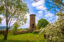 Frühling auf dem Schreckenberg