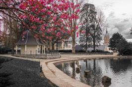 Frühling am Schutzteich - Colourkey