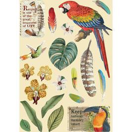 Stamperia-farbige Holzformen A5-Amazonia-Parrot KLSP095