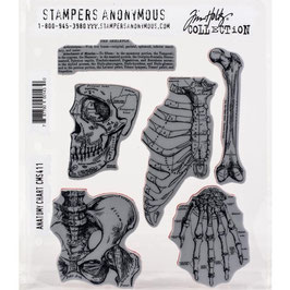 Stampers Anonymous by Tim Holtz-Stempel/Anatomy Chart CMS411