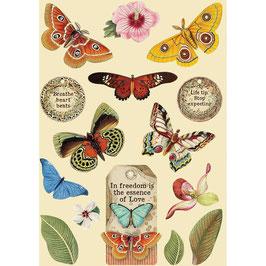 Stamperia-farbige Holzformen A5-Amazonia-Butterfly KLSP093
