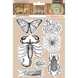 Stamperia-Stempel/Amazonia-Butterfly WTKCC193
