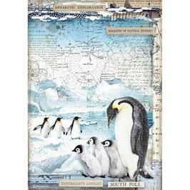 Stamperia Reispapier A4-Arctic Antarctic DFSA4479
